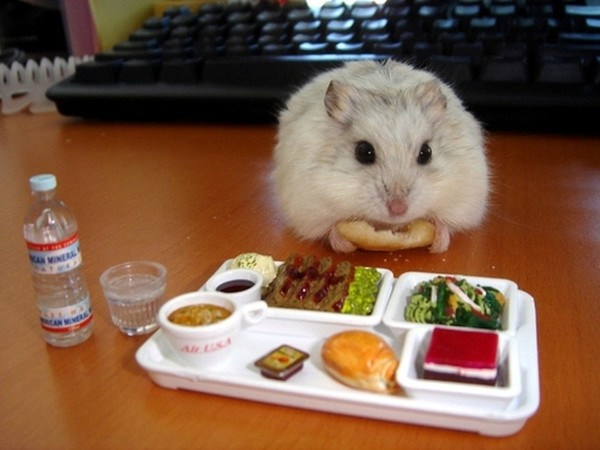 cach-nuoi-chuot-hamster